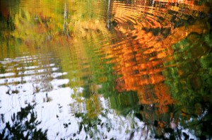 nature reflections in rippling water
